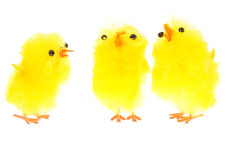 Yellow chicklings Royalty Free Stock Photography