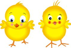Yellow Chicks Royalty Free Stock Photos