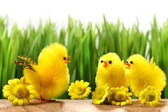 Yellow chicks hiding in the grass Royalty Free Stock Photography