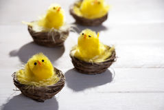 Free Yellow Chicks In Easter Basket Or Nest Royalty Free Stock Photos - 49966128