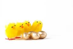 Yellow Chicks next to chocolate eggs Stock Photos