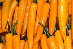 Yellow chilly pepper Royalty Free Stock Photography