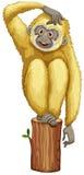 A yellow chimpanzee Stock Photography