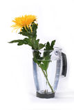 Yellow chrysanthemum. In a jug with water Royalty Free Stock Images