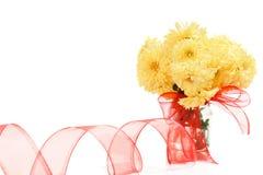 Yellow chrysanthemum Royalty Free Stock Image