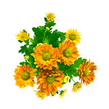 Yellow chrysanthemum bouquet isolated on white Royalty Free Stock Image