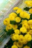 Yellow Chrysanthemum Bunch Stock Image