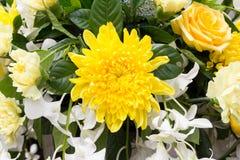 Yellow chrysanthemum flower Stock Photography