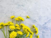 Yellow chrysanthemum blossom flower border anniversary beauty on concrete background frame. Yellow chrysanthemum flower blossom  concrete  beauty  creative royalty free stock image