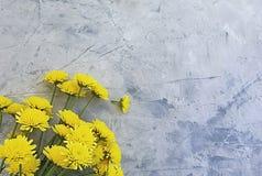Yellow chrysanthemum blossom flower borde holiday anniversary beauty on concrete background frame. Yellow chrysanthemum flower blossom  concrete  beauty stock image