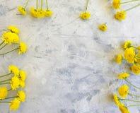 Yellow chrysanthemum flower creative anniversary beauty on concrete background frame. Yellow chrysanthemum flower concrete background frame beauty anniversary stock photos