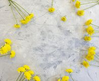 Yellow chrysanthemum flower anniversary beauty on concrete background frame. Yellow chrysanthemum flower concrete background frame beauty anniversary stock photo