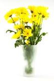 Yellow chrysanthemum flower in glass vase on white background Royalty Free Stock Image