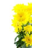 Yellow chrysanthemum flower in glass vase on white background Stock Photo