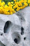 Yellow chrysanthemum flowers Royalty Free Stock Image