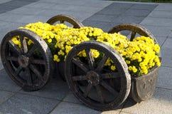 Yellow Chrysanthemum flowers decoration Stock Image