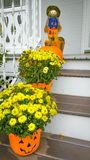 Yellow Chrysanthemum Flowers Growing in Pumpkin Pots stock photo