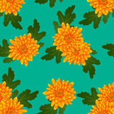 Yellow Chrysanthemum on Green Teal Background. Vector Illustration Royalty Free Stock Photo
