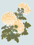Yellow chrysanthemum illustration Stock Photos
