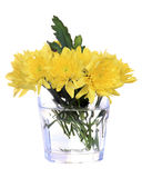 Yellow Chrysanthemum isolated Stock Photo