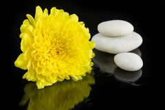 Yellow chrysanthemum and pile of white stone Royalty Free Stock Image