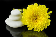 Yellow chrysanthemum and pile of white stone. Royalty Free Stock Photos
