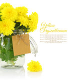Yellow chrysanthemum Stock Photo