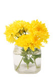 Yellow chrysanthemums Stock Photo