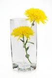 Yellow chrysanthemums Royalty Free Stock Photography