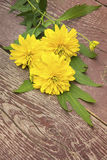 Yellow chrysanthemums flowers on wooden background Stock Image