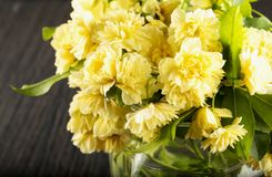 Yellow chrysanthemums in glass jar Stock Photography