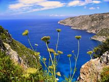 Yellow Chrysanthemums Overlooking Sea View With Mountains Stock Image
