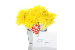 Yellow chrysanthemums in a pail Royalty Free Stock Photos