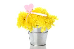 Yellow chrysanthemums in a pail Royalty Free Stock Photography