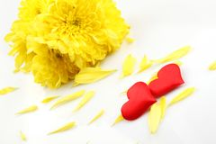 Yellow chrysanthemums with two red hearts Royalty Free Stock Images