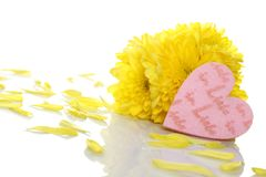 Yellow chrysanthemums with two red hearts Royalty Free Stock Photo