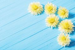 Yellow chrysanthemums on wooden background Royalty Free Stock Photo