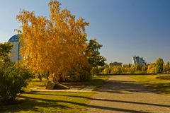 Yellow in the city autumn landscape. Yellowed birch near the monument 'the cross of reconciliation' Volgograd October 2014 Royalty Free Stock Photos