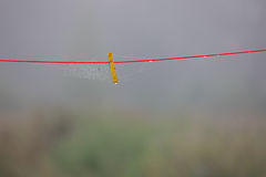 Yellow clothespin and cobwebs on the red rope Royalty Free Stock Photography