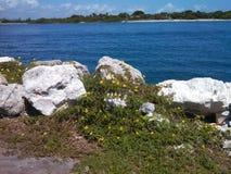 Yellow  coastal flowers Stock Image