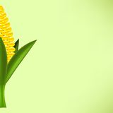 Yellow Cob Corn Stock Photos