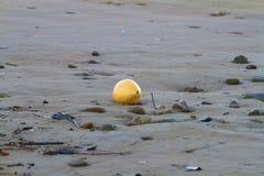 Yellow Coconut Stock Photos