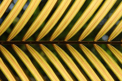 Yellow coconut leaf pattern Stock Image