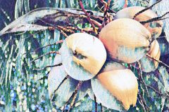 Yellow coconut on palm tree digital illustration. Coco nut bunch faded painted banner template. Exotic nature plant. Tropical garden. Decorative coco palm royalty free illustration