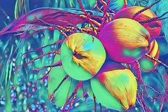 Yellow coconut on palm tree digital illustration. Coco nut bunch psychedelic banner template. Exotic nature plant. Tropical garden. Decorative coco palm stock illustration