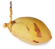 Yellow Coconut Stock Photography