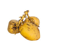 Yellow coconuts. Over white background Royalty Free Stock Images