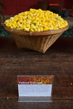 Yellow Cocoon of Thai Silkworms. Used to produce Silk. This picture is taken at Jim Thompson House with brief explanation of the cocoon royalty free stock photography