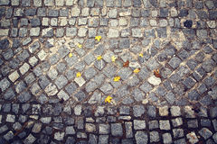 Yellow color autumn leaves on surface cobbled city floor Stock Photos
