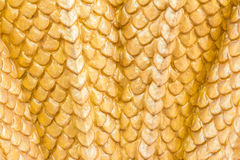 Yellow color Dragon texture. Yellow color Dragon resolution texture Royalty Free Stock Image
